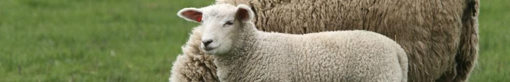 Matériel pour ovins et caprins