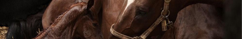 Matériel d'équitation et matériel d'élevage pour chevaux